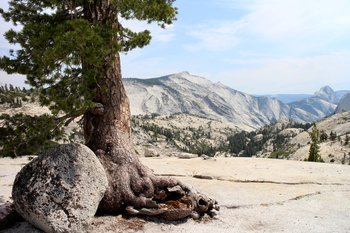 Yosemite National Park. Olmsted Point