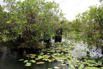 Ostküste: Die Sumpflandschaft des Everglades National Parks